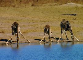 1er Regard Kenya