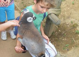 La vie du zoo - été - 6/10 ans